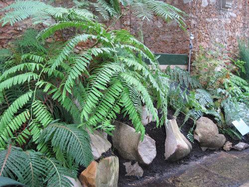 Serre de l'Histoire des plantes