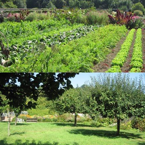 St jean de beauregard fruits et l gumes d 39 octobre novembre for Jardin de jardiniers