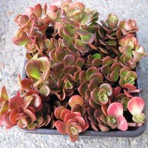 Acheter ses vivaces sur une f te des plantes for Acheter des plantes sur internet