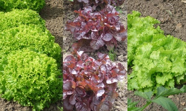 Diversité des formes, des feuilles, des couleurs, etc.