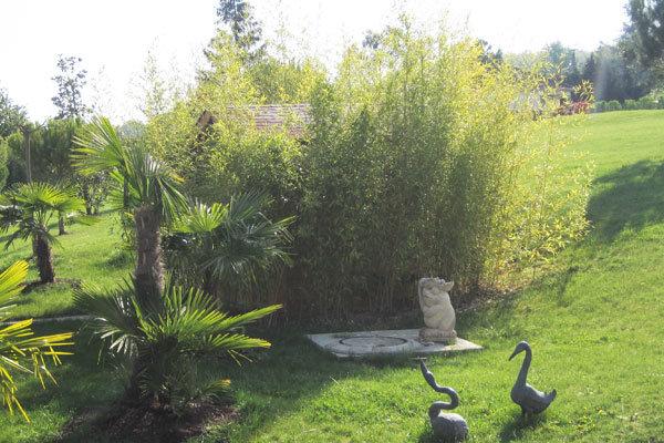Am nagement du jardin la haie de bambous un cran v g tal for Amenagement jardin avec bambou