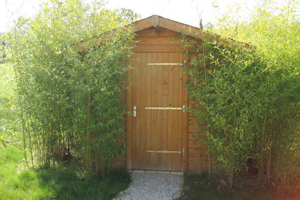 Am nagement du jardin la haie de bambous un cran v g tal Abri jardin bambou