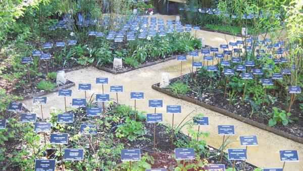 Jardin des plantes disparues - Prise de conscience