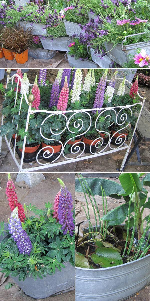 Courson essonne f te des plantes de printemps 2011 for Jardinier essonne