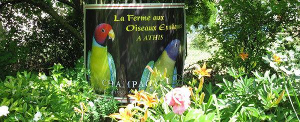 oiseaux athis oiseaux athis ferme des oiseaux exotiques 224 athis marne. Black Bedroom Furniture Sets. Home Design Ideas
