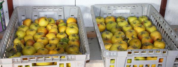 Comment conserver les pommes tout l 39 hiver - Comment conserver pomme de terre ...