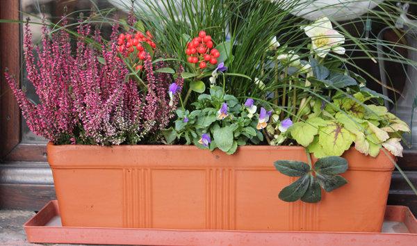 Fleurir les jadini res en hiver for Composition florale exterieur hiver