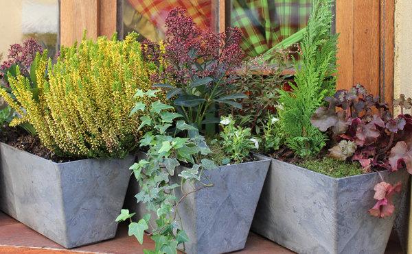 De belles fleurs dans une jardini re d 39 hiver - Idee composition jardiniere exterieure ...