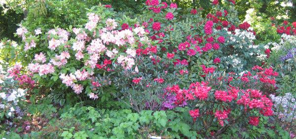 Mai que faire au jardin for Plantes ornement jardin