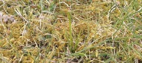 Les causes de la mousse dans la pelouse