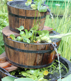 am nagement du jardin un bassin miniature dans un tonneau. Black Bedroom Furniture Sets. Home Design Ideas