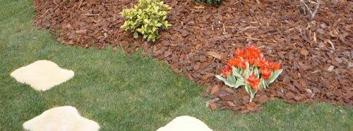 Pailler le sol au jardin for Quel arbre pour mon jardin