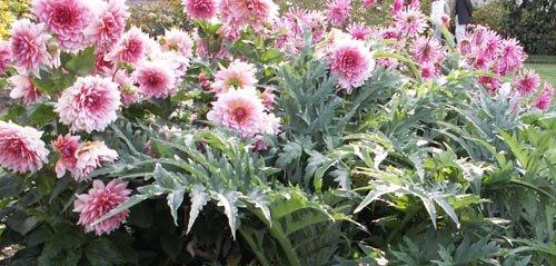 Gestes de jardinage en septembre