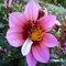 Forum Bizarreries chez les fleurs