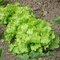 Forum Légumes et jardin potager