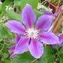 Blogs de jardin