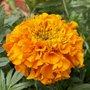 Fleurs et jardin d'ornement