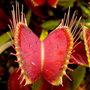 Plantes exotiques et carnivores