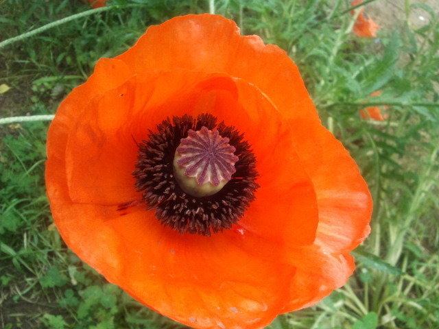 ...à la fleur rouge et au coeur noir