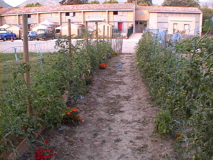 Allée de tomate
