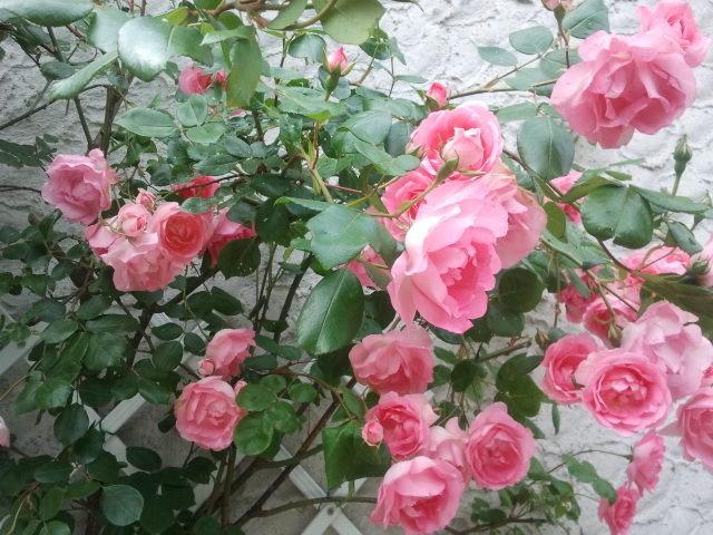 ...alourdi de fleurs