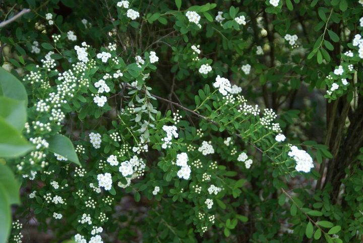 Arbuste inconnu