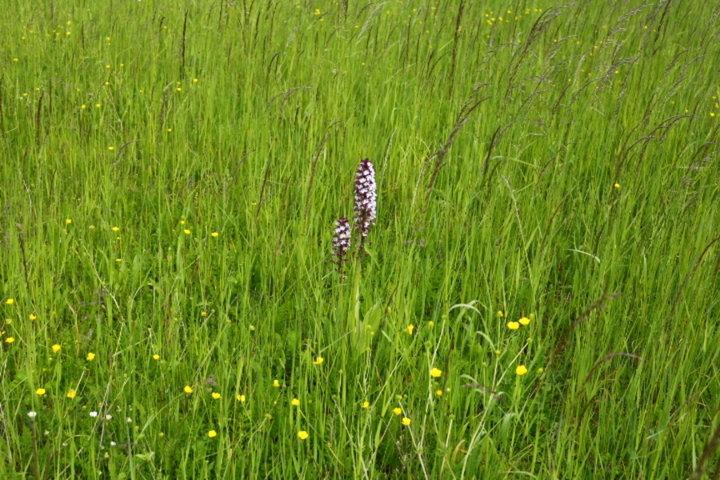 Au milieu des herbes