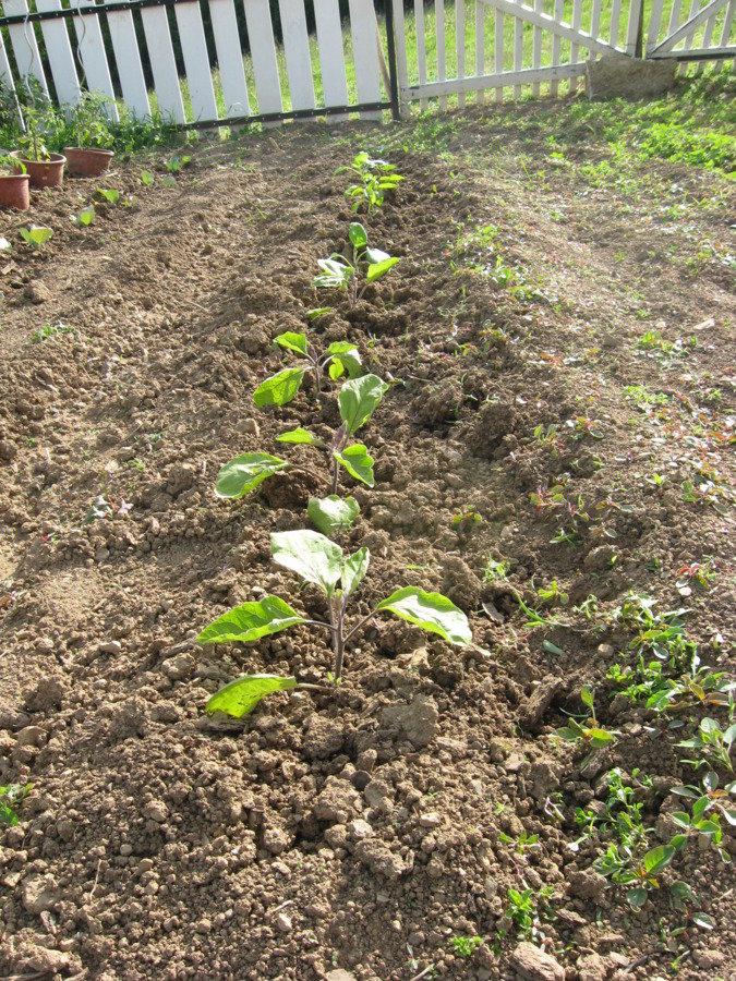Aubergines, poivrons et concombres