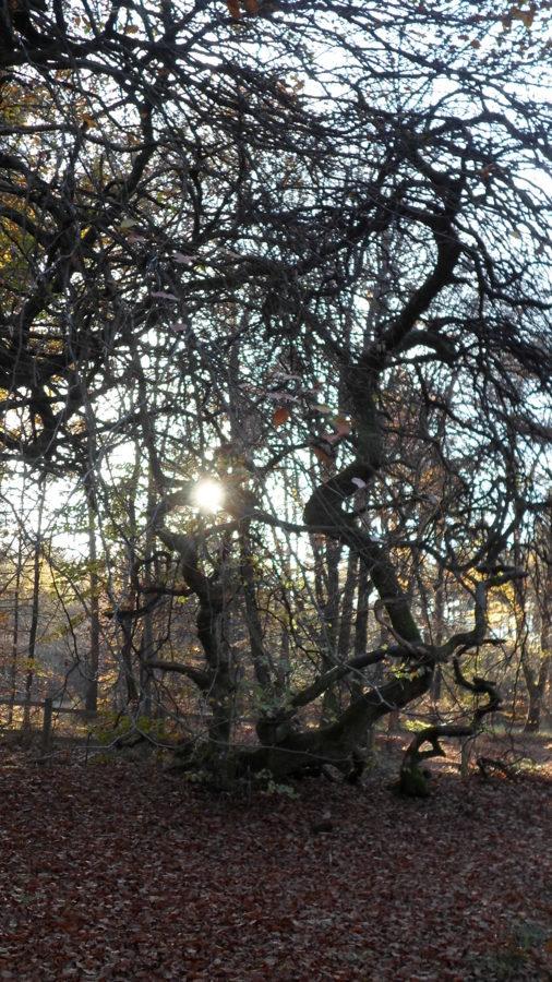 Cache-cache avec le soleil