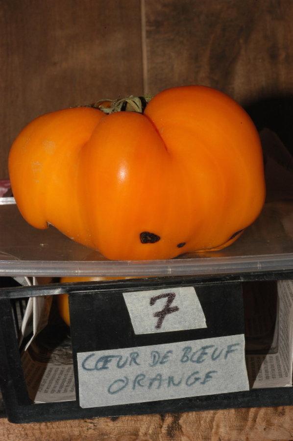 Coeur de boeuf orange