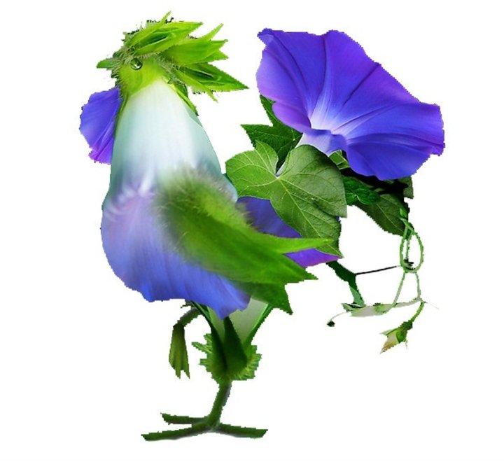 Coq en fleurs