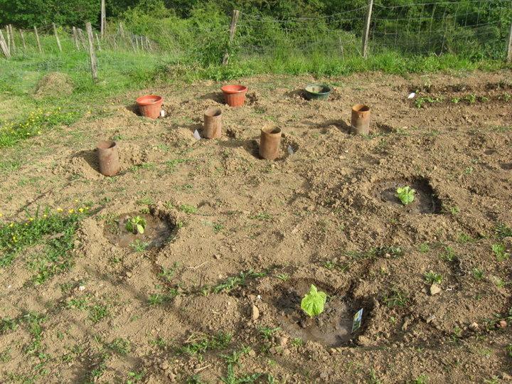Courgettes, melons, potimarrons et patisson