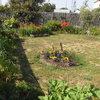 Création d'une pelouse rustique