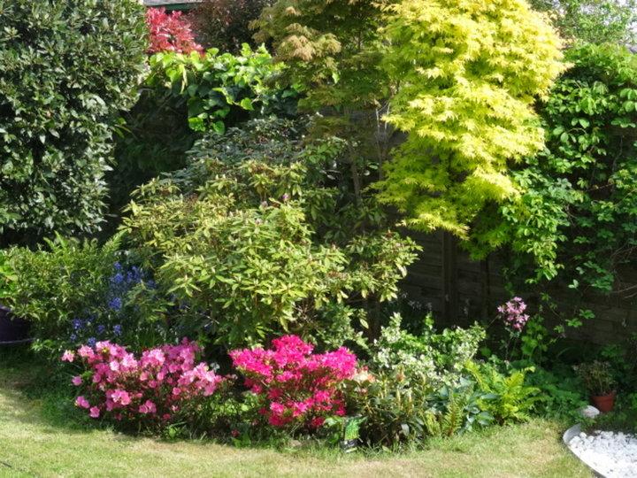 Dans le jardin aujourd'hui