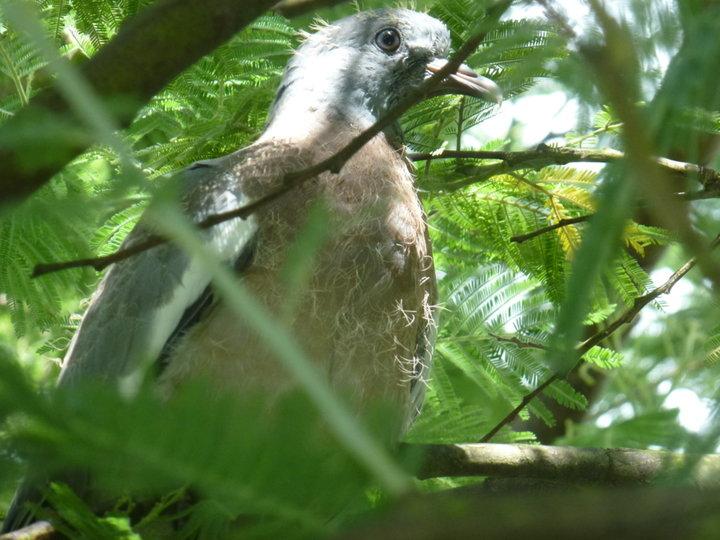 Dans le Mimosa
