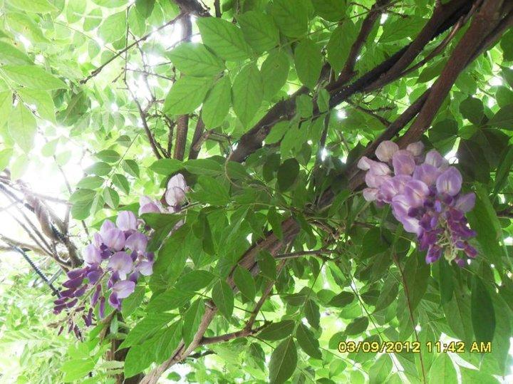 Dèbut septembre et encore en fleurs