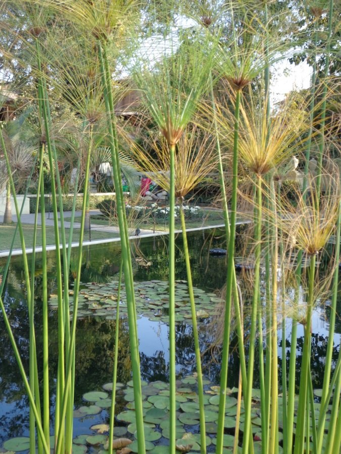 Dream garden katmandou