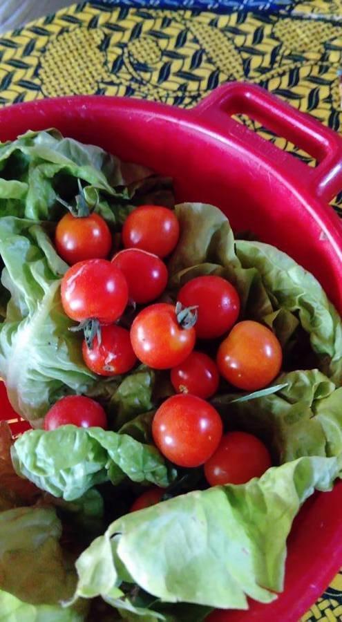 En avant pour la salade