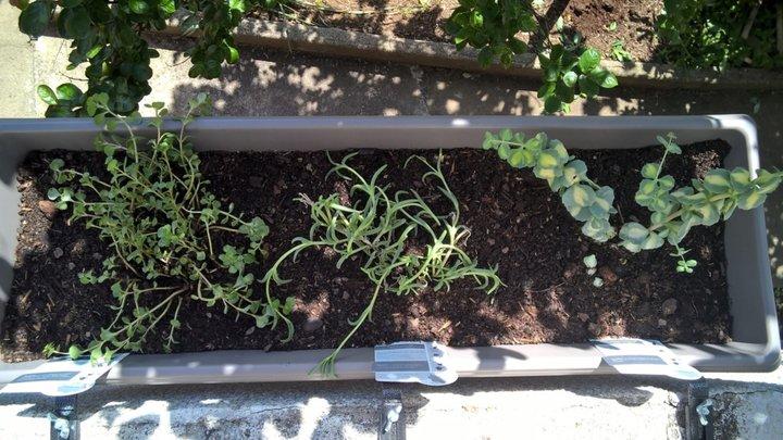 Encore des plantes résistantes aux fortes chaleurs