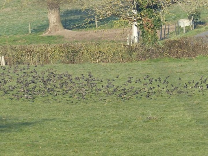 Envolee de pigeons