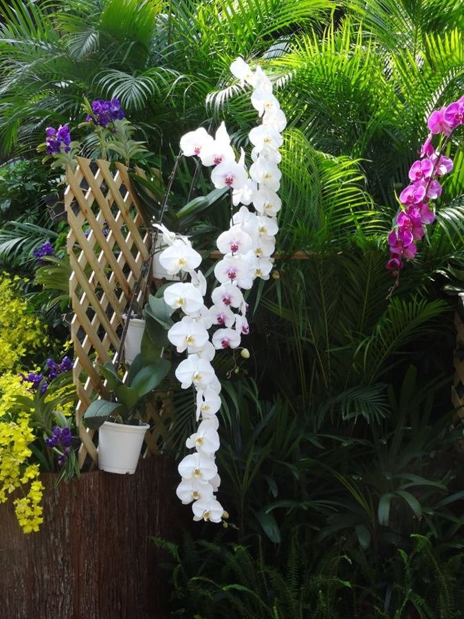 Exposition orchidées - MACAO - 2015
