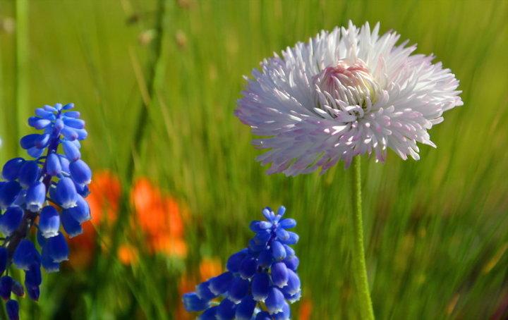 Fleur de massif