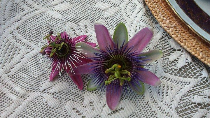 Fleurs de passiflores, deux sortes différentes