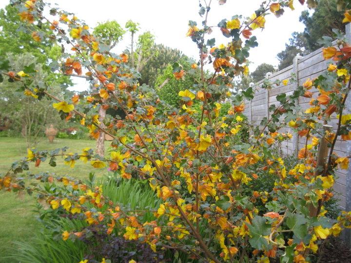 Fleurs et plantes de mon jardin