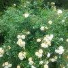 Quelques fleurs malgré la pluie
