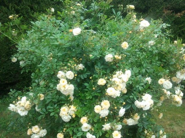 Fleurs et promesse de fleurs