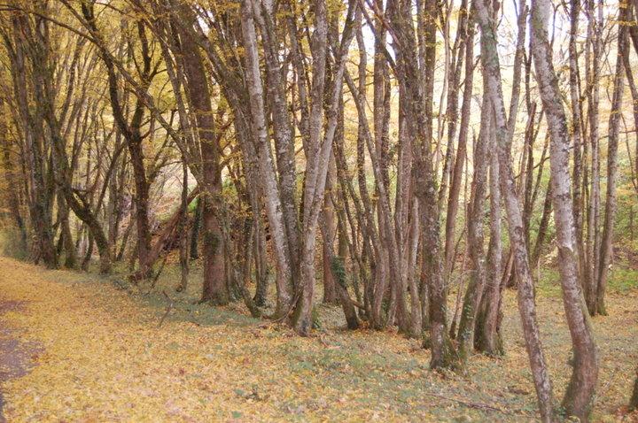 Forêts en automne ...