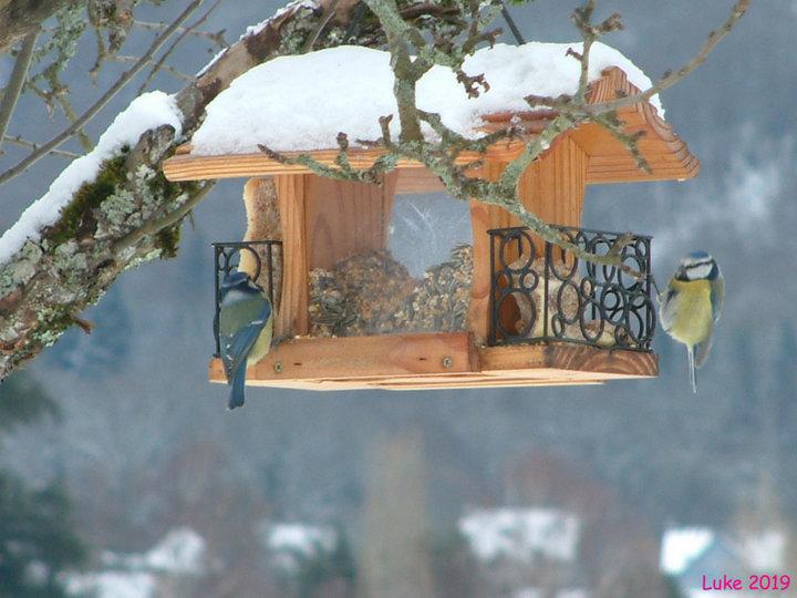 Graines et pains de graisse pour l'hiver