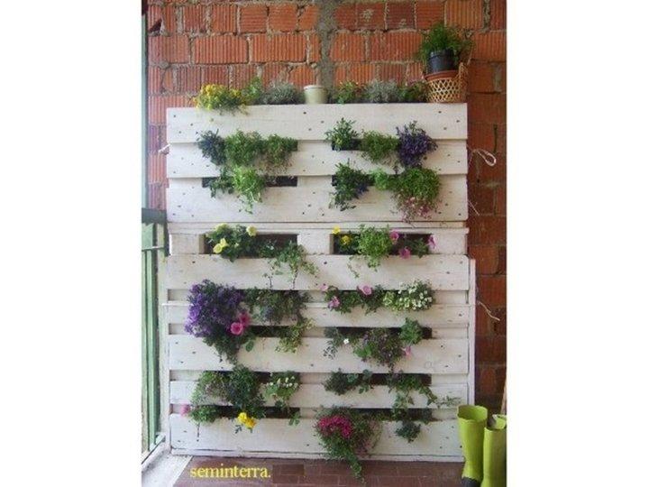 Grand cadre plantes