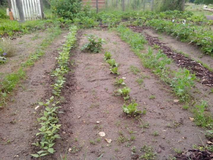 Haricots verts, salades maison, petits pois et tjrs beaucoup d'herbe...